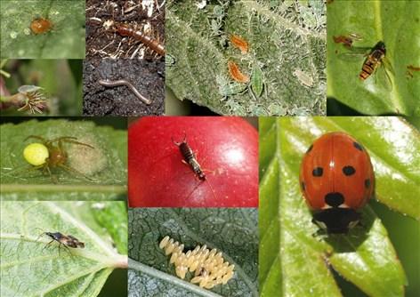 biologisk bekæmpelse